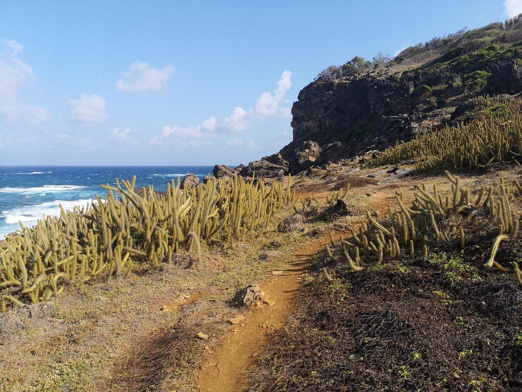 Noronha Mirante Praia do Sueste Kakteen 2