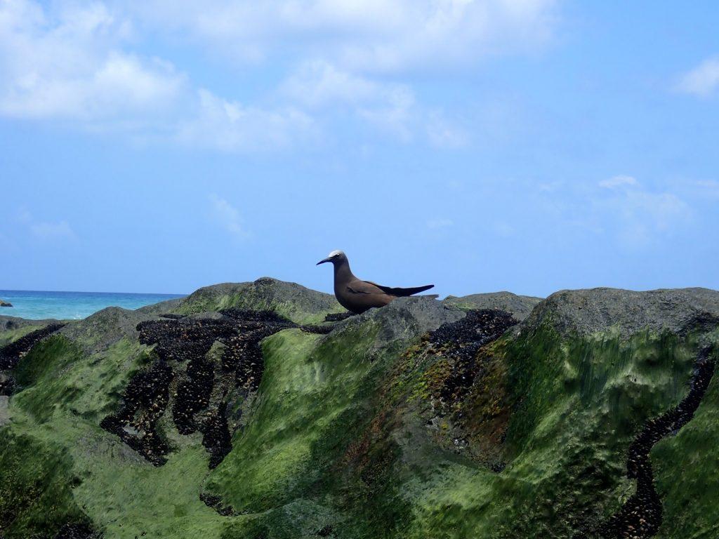 Noronha Praia do Boldro Vogel