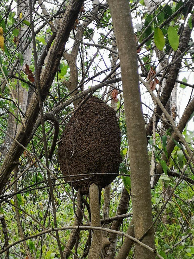 Noronha Termiten