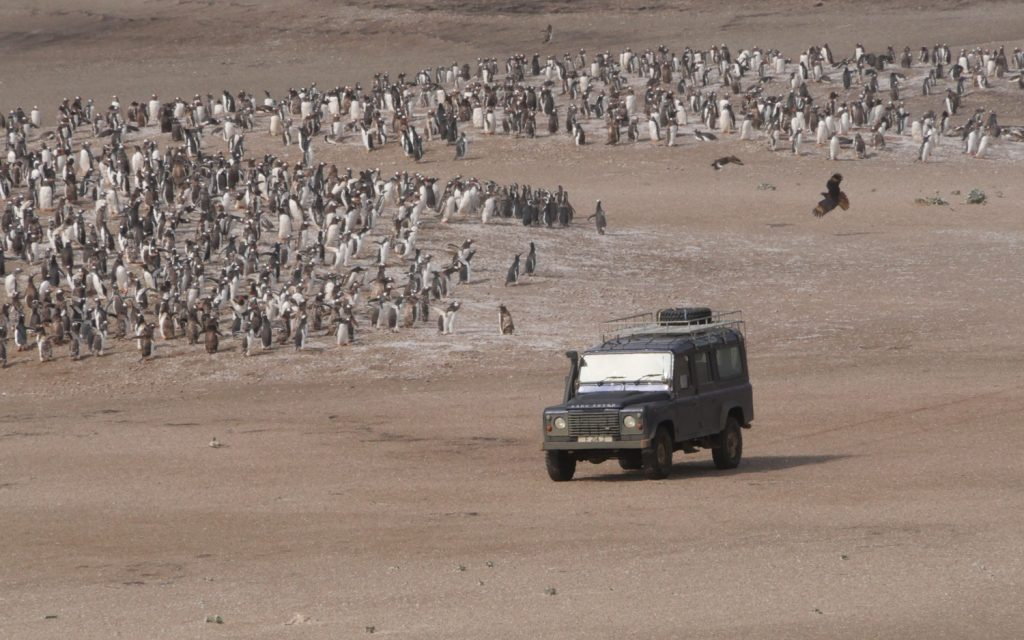 Land Rover Saunders Island Pinguine