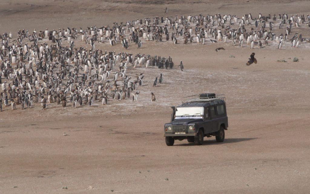 Land Rover Saunders Island Pinguine
