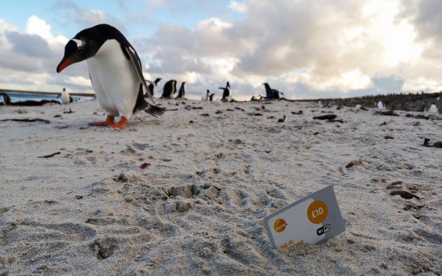 Das kostet Urlaub auf den Falklandinseln