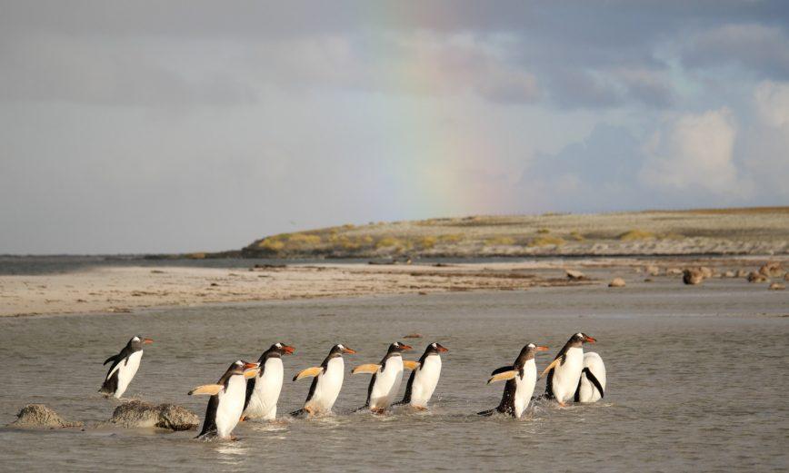 Reisebericht: Unter Pinguinen – Eine Woche Urlaub auf den Falklandinseln